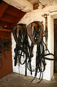 Horses harness hanging from wooden rods in a stone barn wall poster