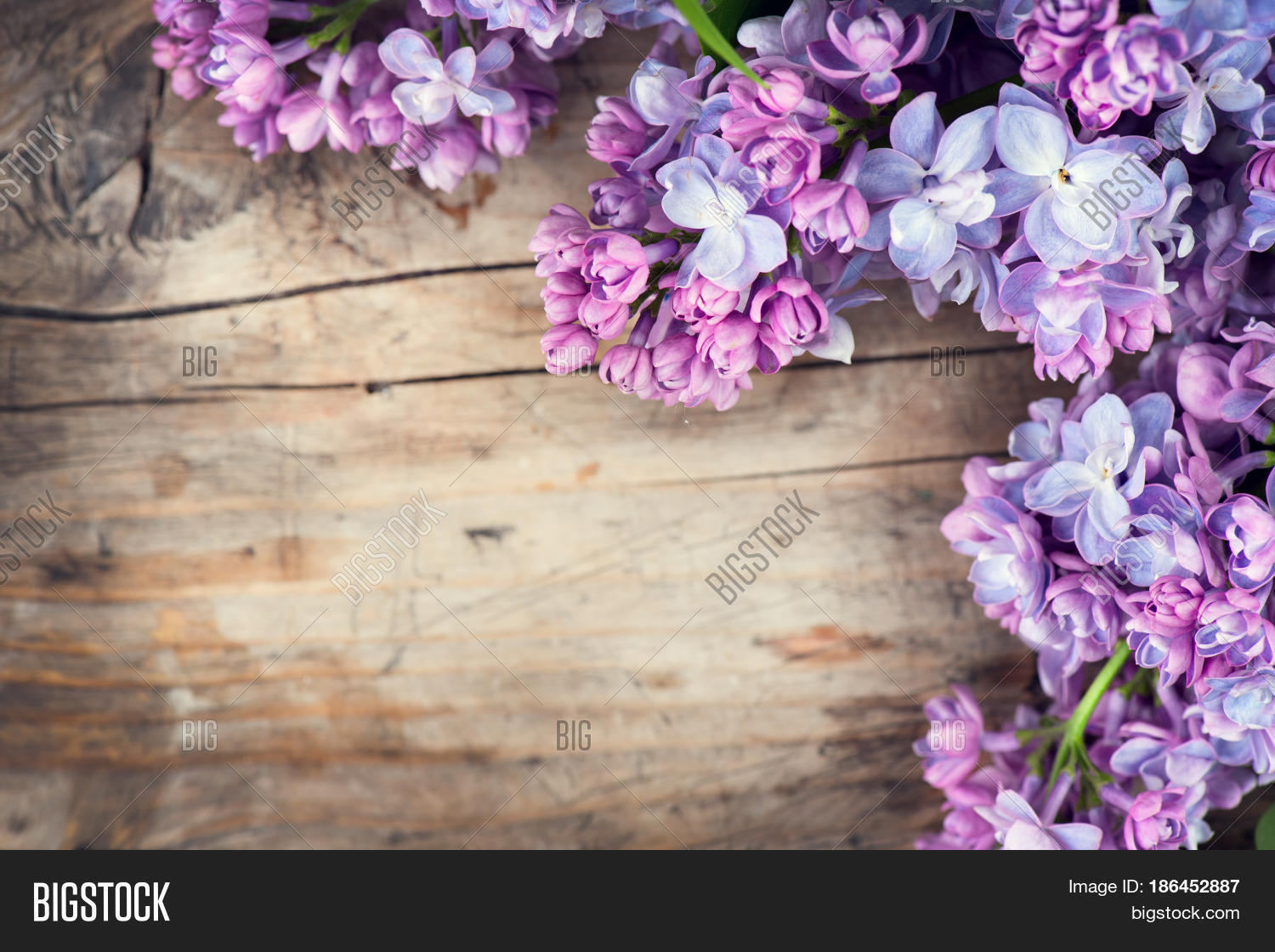 Lilac Flowers Bunch Image & Photo (Free Trial) | Bigstock