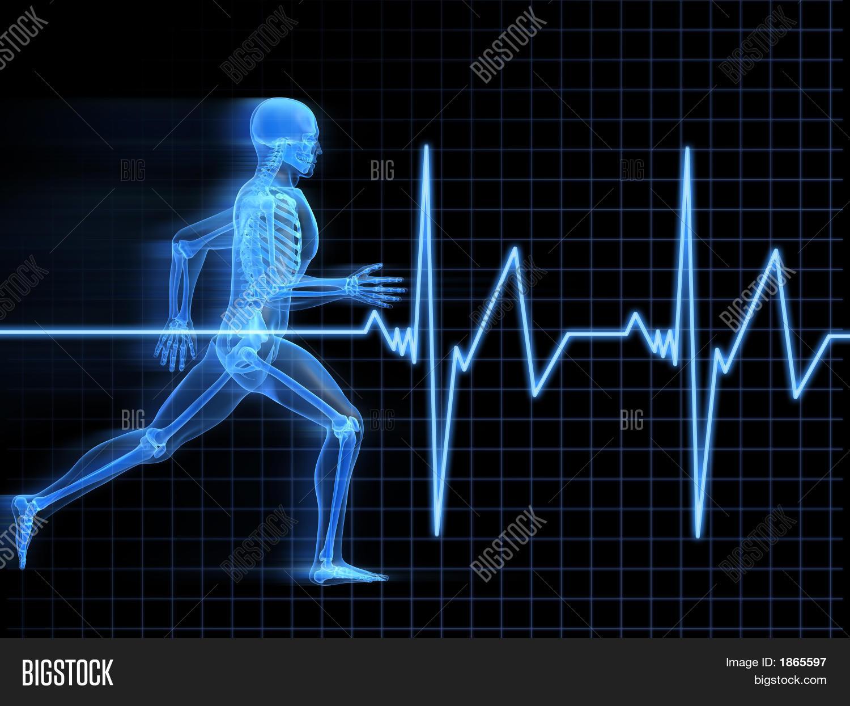 Running Man Anatomy Image & Photo (Free Trial) | Bigstock