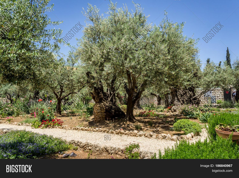Garden Gethsemane On Image & Photo (Free Trial) | Bigstock