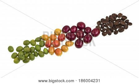 From green to roasted different degrees of ripeness of coffee beans isolated on a white background