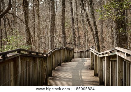 Walking trail thru natural wood setting.  Wood boardwalk path through forest.  Explore and enjoy recreational walk or hike through the woods.