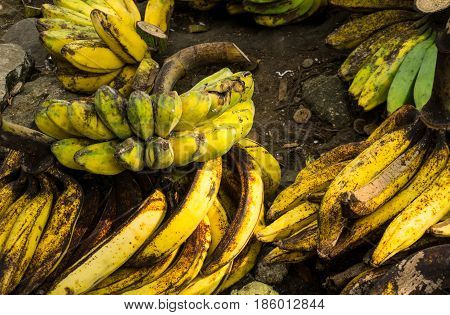 ripe plantains banana with yellow colour on sale in Bogor traditional market photo taken in Bogor Indonesia java