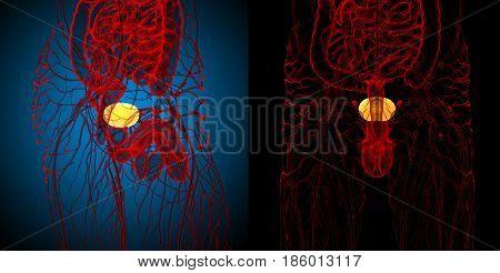 3D Rendering Medical Illustration Of The Bladder