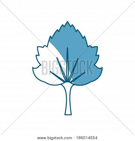 grape leave natural foliage shadow vector illustration
