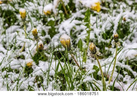 winter in spring in May 2017 Belarus