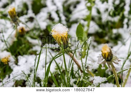 anomalous spring in Belarus the snow fell in May 2017