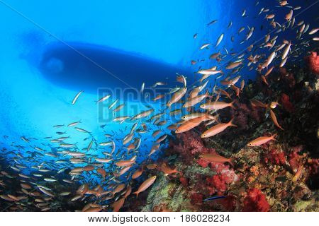 Scuba dive boat above coral reef with fish