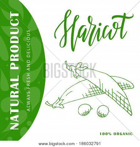 Hand drawn vegetarian illustration. Isotaled haricot element. Vector sketch for card or poster