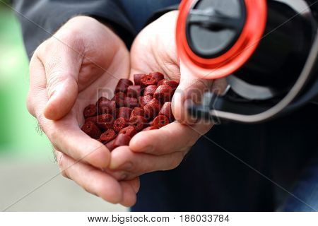 Dry fish bait held in the hands of an angler