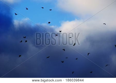 Migratory birds on a background of clouds.