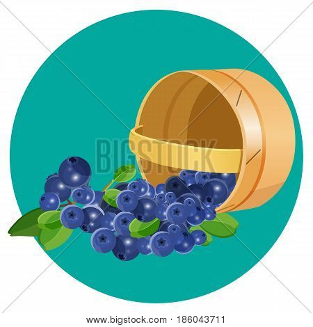 Wooden overturned basket with blueberries realistic vector illustration isolated on blue circle. Blue healthy berries with green leaves