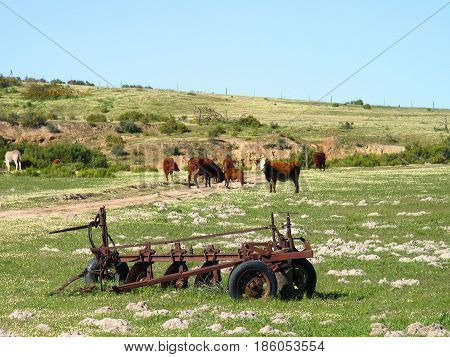 FROM DARLING, CAPE TOWN SOUTH AFRICA, OLD RUSTIC FARMING MACHINERY AND ANIMALS IN THE FORE GROUND AND A HILL IN THE BACK GROUND