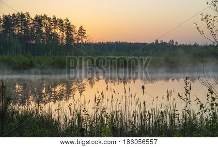 Forest lake covered with mist at sunrise. Water surface is calm so forest and morning sky are reflected. Green grass and bulrush silhouettes in foreground.