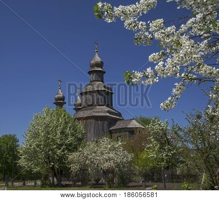 Wood church (Saint George's) surrounded with blossom trees. Place - Sedniv Ukraine.