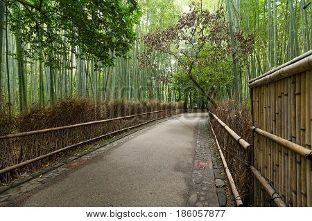 Bamboo groves of Arashiyama
