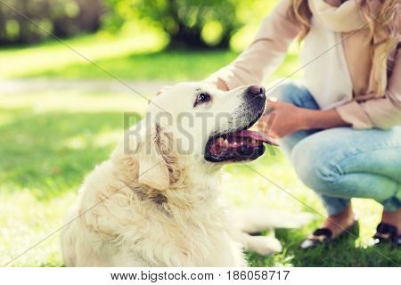 family, pet, animal and people concept - close up of woman with labrador dog on walk in park