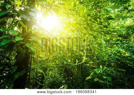 Fantastic tropical dense forest view with sun flare in morning.