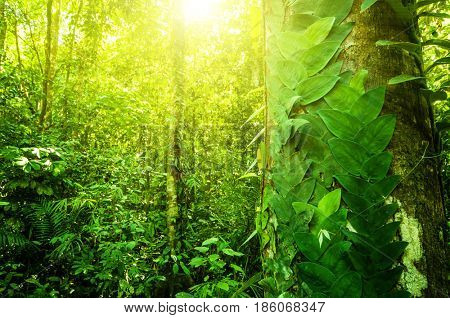 Fantastic tropical forest landscape with sun flare in morning.