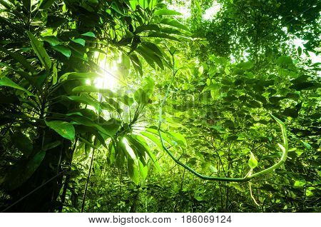 Fantastic tropical dense jungle view with sun flare in morning.