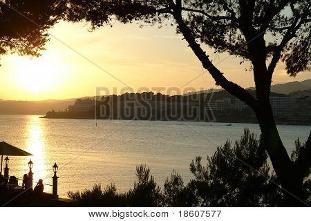 Palms on beach on sunset of a sun