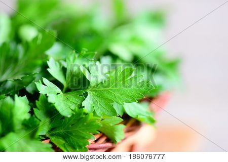Organic parsley leaves. Rich source of flavonoid and antioxidants, folic acid, vitamin K, vitamin C and vitamin A. Raw nutrition. Rustic style. Closeup