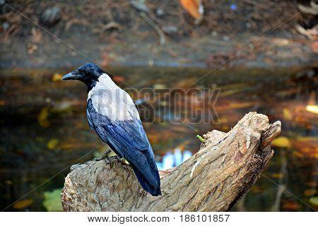 Giza Zoological Garden EGYPT,the amazing nature .