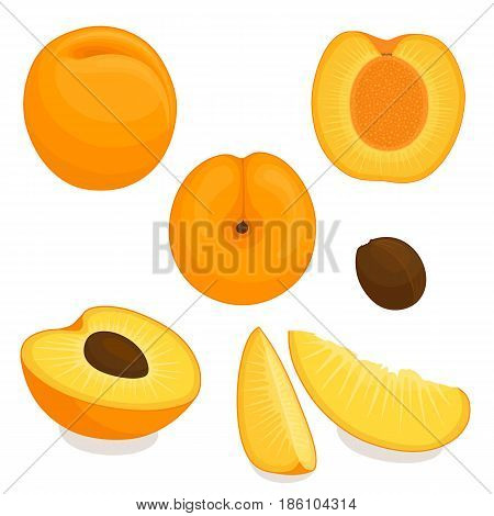 Vector apricot. Set of whole, sliced, half of apricots isolated on white background. Illustration.