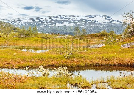 summer view to mountain bog and lake in Norway