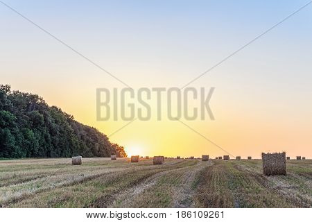 Wheat field after harvest with straw bale in light of the low evening sun backlight. Field with hay rolls on the sunset.