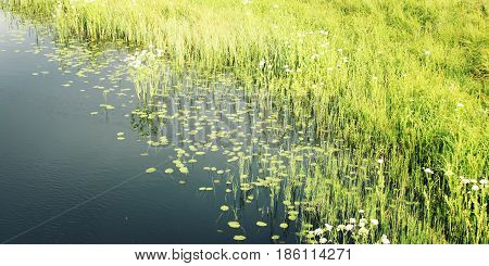 Water Plants Near The Shore Of Kenozero Lake.