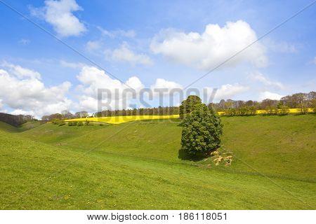 Green Valley Pasture