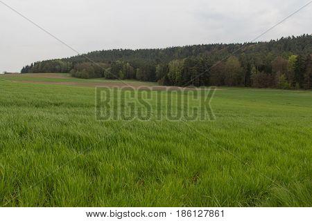 Spring landscape next to Schwandorf in bavaria on a sunny day