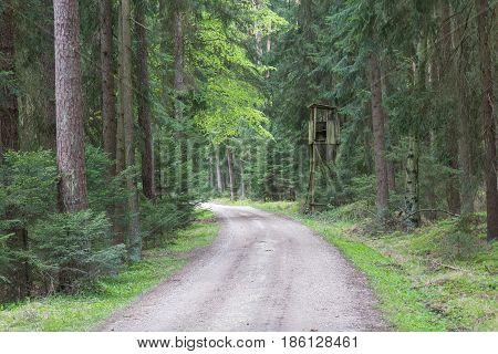 a forest in bavaria next to Schwandorf in spring