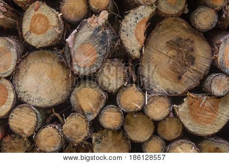 firewood stapled in the forest after being cut