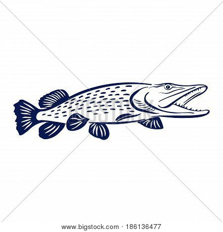 Isolated illustration of big pike fish Vector illustration can be used for creating logo and emblem for fishing clubs, prints, web and other crafts