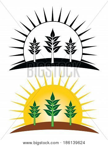 Planting Growing Farming Design Is an illustration of three multi-leafed growing plants sprouting from the ground with the rising sun in the background. Includes both a black and white and color version.
