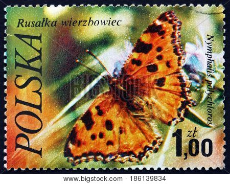 POLAND - CIRCA 1977: a stamp printed in the Poland shows the Large Tortoiseshell Nymphalis Polychloros Butterfly circa 1977