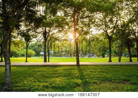 Sun Light Beam On Park With Tree Green Grass