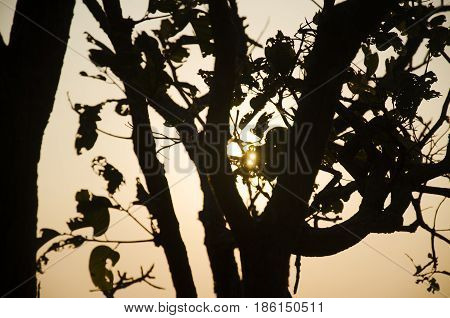 Silhouette Of Tree With Sunrise