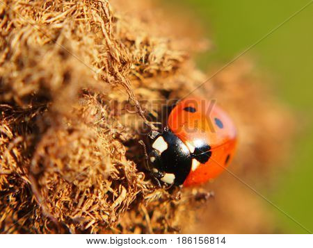 Extreme close up view of insect ladybug