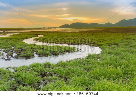 Sunset sky background over Cracked ground with small green grass with small water way natural landscape background