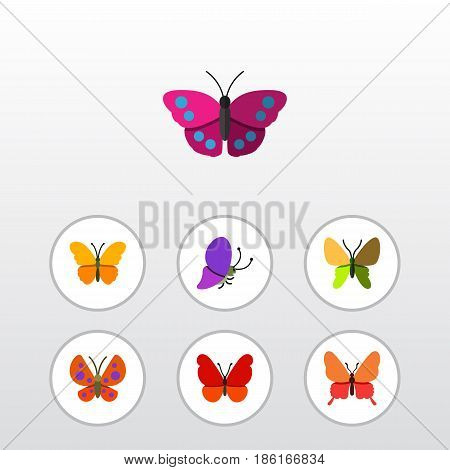 Flat Moth Set Of Archippus, Butterfly, Monarch And Other Vector Objects. Also Includes Archippus, Milkweed, Monarch Elements.