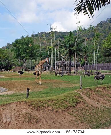 The territory of the zoo with a giraffe and other animals