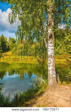 Birch on the lake in the autumn forest