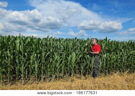 Farmer or agronomist examining corn plant field using tablet