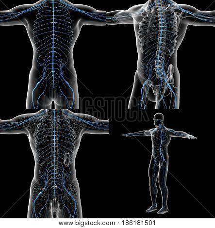 3D Rendering Illustration Of The Male Nervous System
