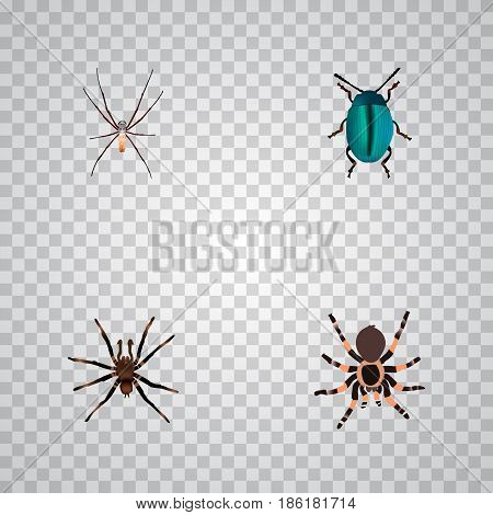 Realistic Arachnid, Tarantula, Bug And Other Vector Elements. Set Of Bug Realistic Symbols Also Includes Spider, Bug, Spinner Objects.