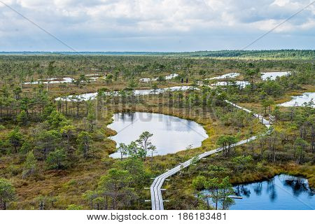 Cenas tīrelis swamp wood trail in Latvia