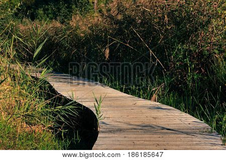 Wooden footpath through a swamp in Het Vinne Zoutleeuw Flanders Belgium Europe